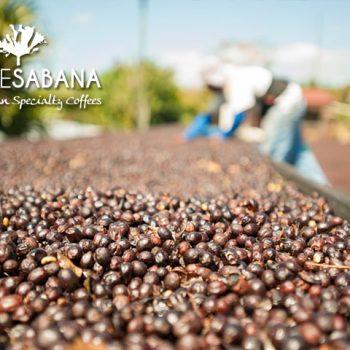 Costa Rican Artisan Coffee Experience